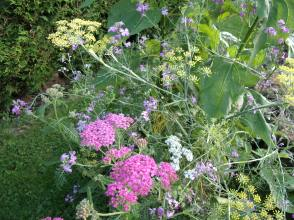 herb and flower edge to polyculture 3